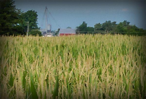 Shideler Grain Co., Inc.
