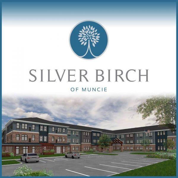 Silver Birch of Muncie